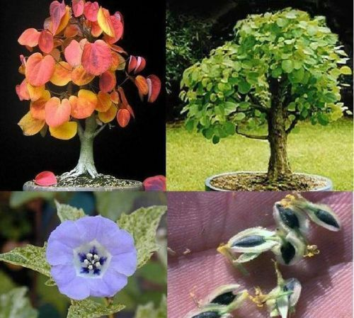Duftpflanzen Sortiment Set für die Wohnung duftende blühende Zimmerpflanzen Deko