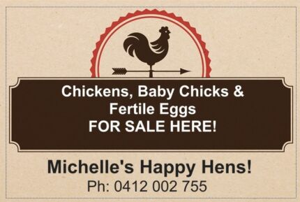 Baby chicks & Fertile Chicken Eggs for sale! Kenthurst The Hills District Preview