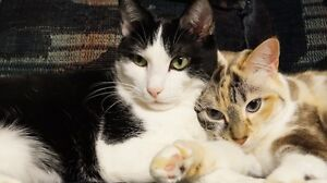 Two Loving Adult Male & Female Cats Needing Forever Home