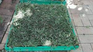 Real Turf Pet Potty Platforms Coorparoo Brisbane South East Preview