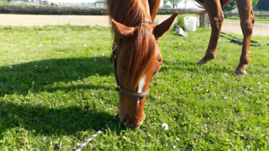 Looking for Outdoor Horse Boarding in the Ridgetown Area
