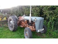 Massey Ferguson grey/ gold 35 4 cyl tractor