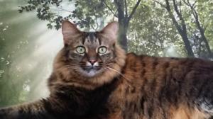 FREE BEAUTIFUL FEMALE CAT