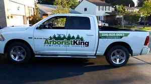 TREE SERVICES.  Removal, trimming, hedges, Stump removal and mor Kitchener / Waterloo Kitchener Area image 1