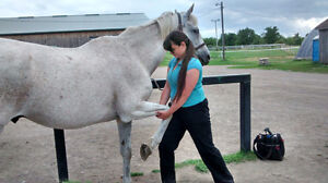 Stable Hands Equine Massage Therapy Cambridge Kitchener Area image 2