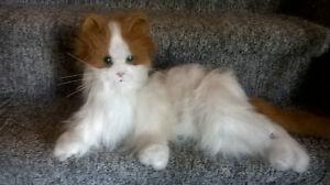 Lulu FurReal Cat Kingston Kingston Area image 3