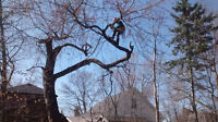 Tree Removal, Pruning, Planting, Storm Damage Cleanup
