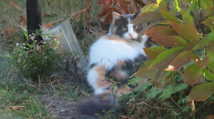 Cat found in middle sackville