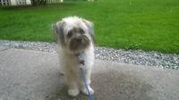 Seeking Dog Walker in Midtown Area