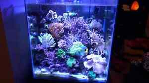 60 gallon reef tank/stand  with overflow and sump.