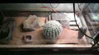 30 gallon tank setup with 3 lizards