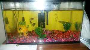 Fish with tank and accessories  Cornwall Ontario image 2