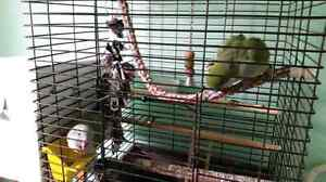 Two.Quakers birds and cage for sale