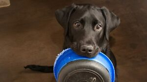 NEED DOG FOOD FOR ANIMAL RESCUE