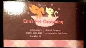 Licensed & Certified Animal Groomer