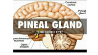 ✔Psychic Training ✔ Natural Human Function - Pineal Gland -
