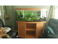 JUWEL vision 450 tank and stand in beech