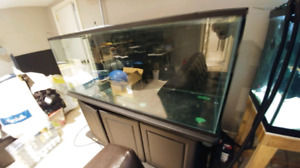 120 gallon fish tank with stand, $160