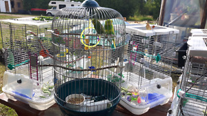 Budgies and cage/ assesories & outside Avorie