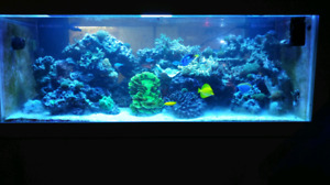 330 Gallon Saltwater Reef Setup