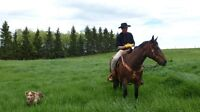 Mounted Herdsman with Registered Stock Dog- For Hire-