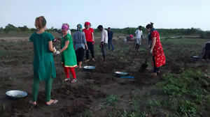 Sustainable agriculture and organic farming in India
