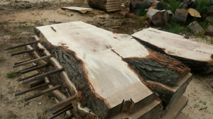 Maple and ash live edge slabs for sale