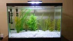 20 gallon fish tank with everything you need  London Ontario image 1