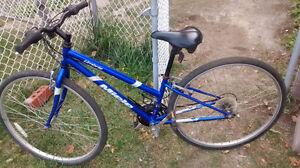 """Vélo """"miele"""""""