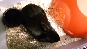 Black bunny found!
