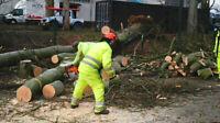 Ramasse arbre à donner, abattage d'arbre gratuitement