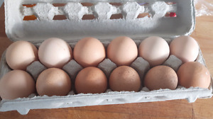 Free range fresh farm eggs