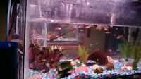 Guppies for sale have to many