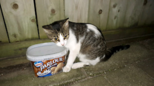 Lost/Stray Cat Found!