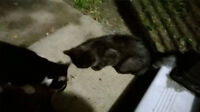 Found: 1 Male, and Female Cat East Hamilton