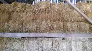 Small wheat straw square bales