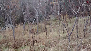 Rent to Own - Ravine Building Lot