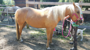 6 year old mare for sale.