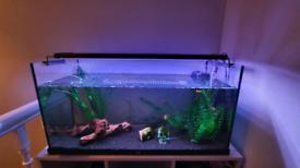 90L Juwel Fish Tank - Full set up