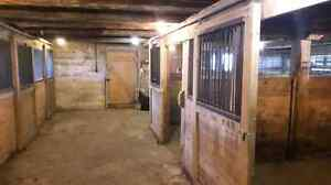 Horse stalls for rent Kawartha Lakes Peterborough Area image 1