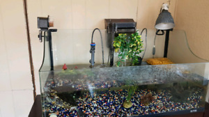 Tank and stand for turtle
