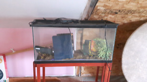 Large aquarium with stand and reptile cover