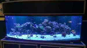 Salt water tank 160 gallon
