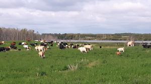 Supervised pasture