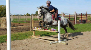 Fun athletic jumper mare for part board