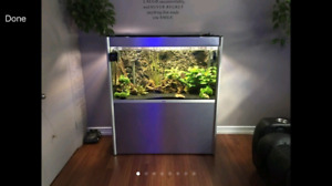 **Beautiful freshwater aquarium** 75 gallon