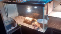 90 gallon tank and two bearded dragons