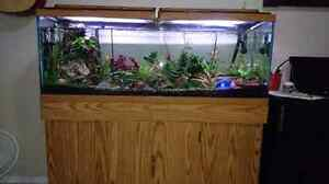 55gallons aquarium on sale for $800 obo