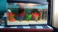 Free!! African Dwarf Frogs, and fish with 10 gallon tank