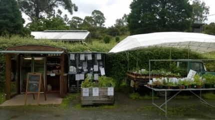 Herb Plants Longley Kingborough Area Preview